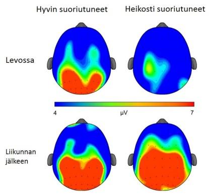 Kuva 9. Aivojen aktiivisuus kasvoi